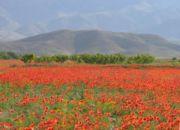 move_armenia